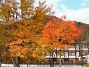 写真:奥入瀬渓谷の紅葉