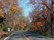 写真:十和田湖の紅葉