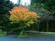 写真:花園神社